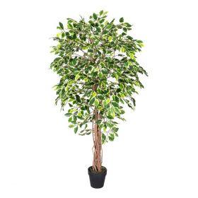 Artificial Variated Ficus Tree Replica Plant- 6 Feet